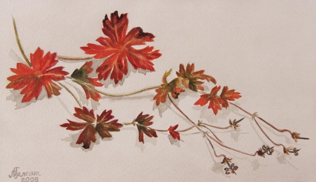 Фото гербария из цветов 97